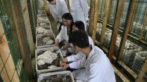 """山东省邹城市:""""小蘑菇""""成为乡村振兴大产业"""