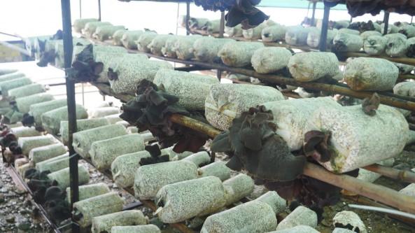 甘肃省徽县:发展食用菌特色产业 促进乡村振兴