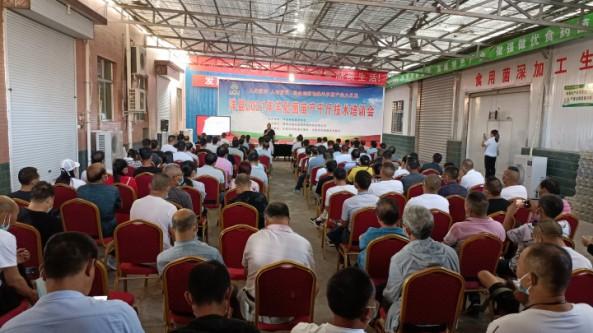 陕西省洋县科协举办全国科普日羊肚菌高产技术培训