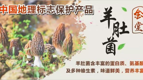 """四川省成都市:""""金堂羊肚菌""""地理标志产品包装设计大赛即将开启"""