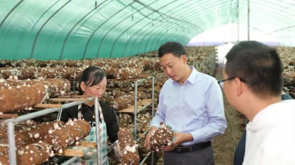 贵州省六盘水市水城区领导调研食用菌产业发展情况