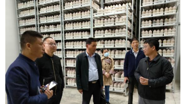 秀珍菇液体菌种栽培技术指导与示范