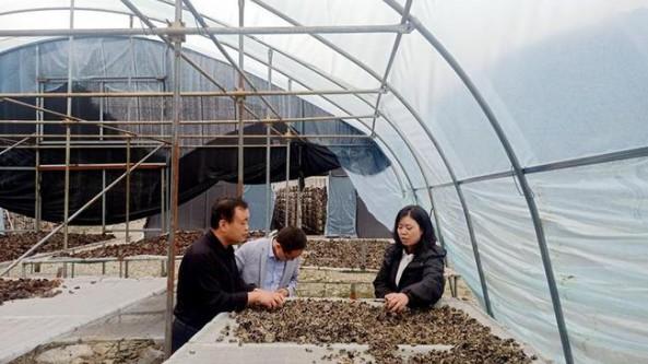 甘肃省武山县科技局赴麦积区考察黑木耳产业发展情况