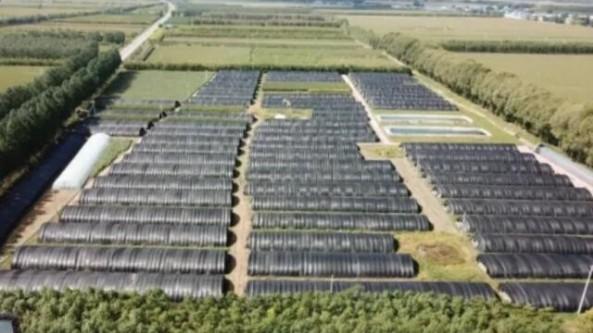黑龍江省肇州縣:積極推進農業產業結構調整 小靈芝帶來大效益