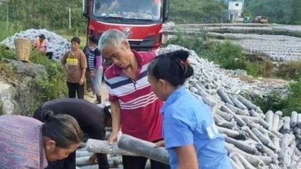 貴州省沿河縣:小小黑木耳成為致富好產業