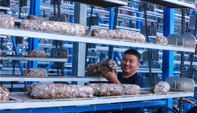 河南省光山县:种植香菇 村民走上增收致富路